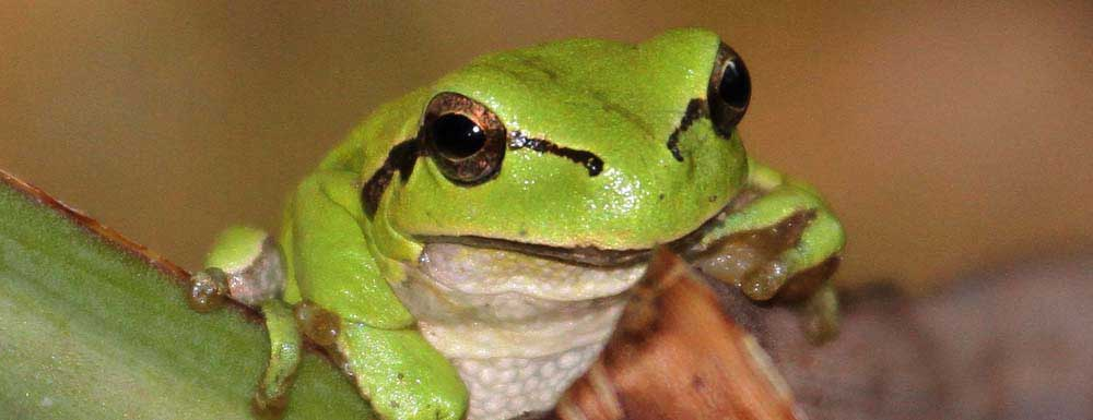 Find amphibians and reptiles in La Mancha from €100 for two people