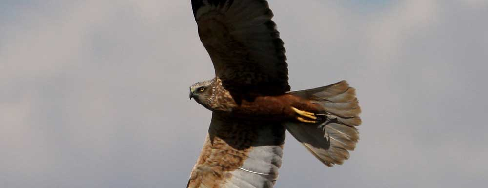 Bird Tours of the wetlands of La Mancha from €100 for two people