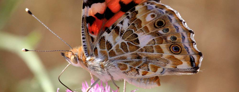 Wildlife Tours of La Mancha from €100 for two people